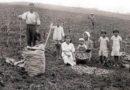 18 de Junho: Dia da Imigração Japonesa