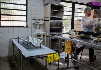 Zoonoses de Taboão da Serra realiza castração de cães e gatos que estão na fila de espera